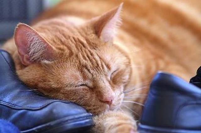 Foto Tranquillanti naturali per Gatti
