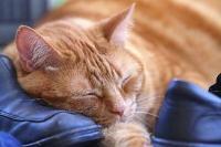 Tranquillanti naturali per Gatti
