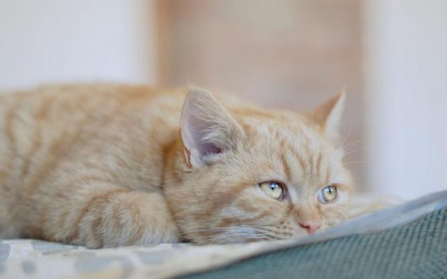 Foto Il mio gatto è depresso: cause, sintomi e trattamento
