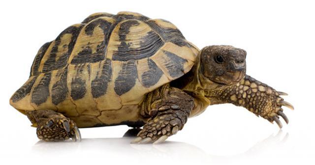 Foto Specie di Tartarughe