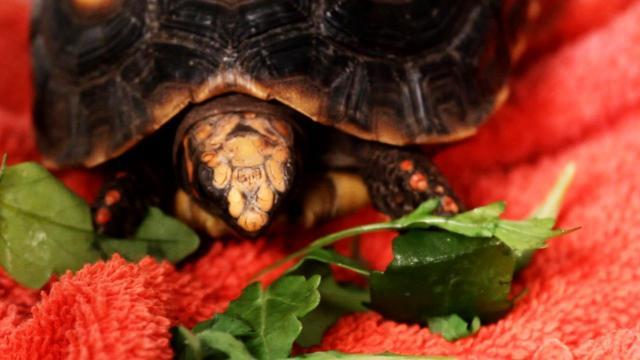 cosa mangia la tartaruga