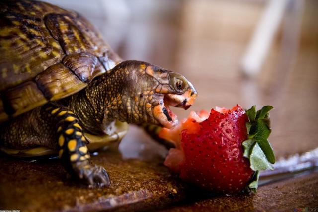 Foto Perchè la Tartaruga non mangia?