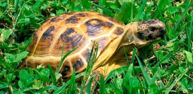 Foto Verdura per la Tartaruga