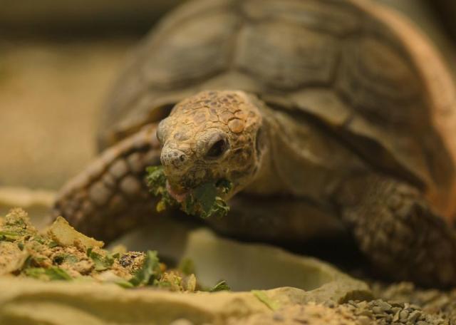 trattamento delle infezioni dellocchio di tartaruga