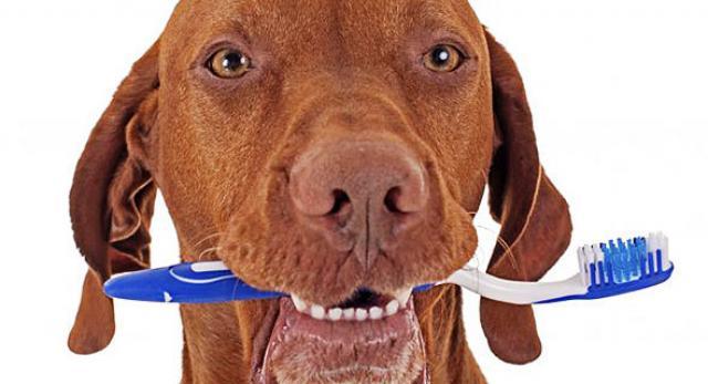 Foto Alcuni modi per pulire i denti al Cane