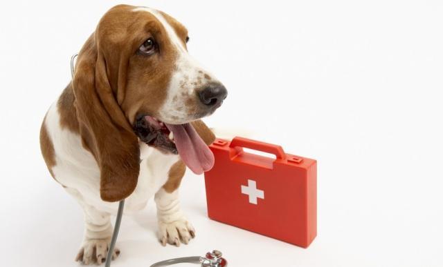 Foto Pronto soccorso per il Cane