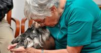 Foto Alzheimer nel Cane: sintomi e trattamento