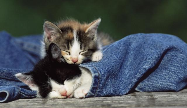 Foto Il gatto ha la pelle grassa? cause e soluzioni