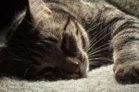 Foto Segni che il Gatto sta per morire