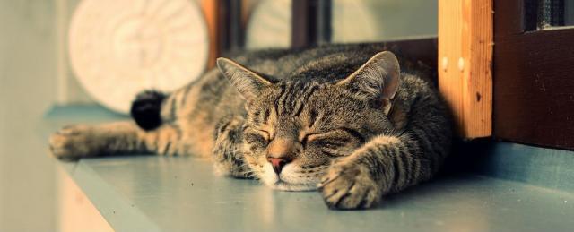 Foto Quanto vive un gatto?