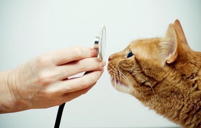 Foto Calcoli renali nel Gatto: sintomi e trattamento