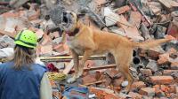 Foto Il cane può prevedere un terremoto?