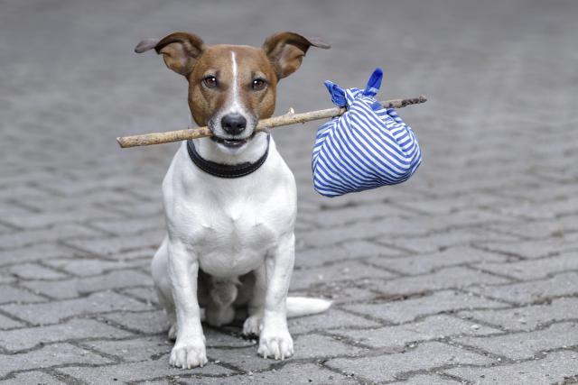 Foto Cosa bisogna fare in caso di smarrimento del proprio animale?  Scopriamo insieme le linee guida.