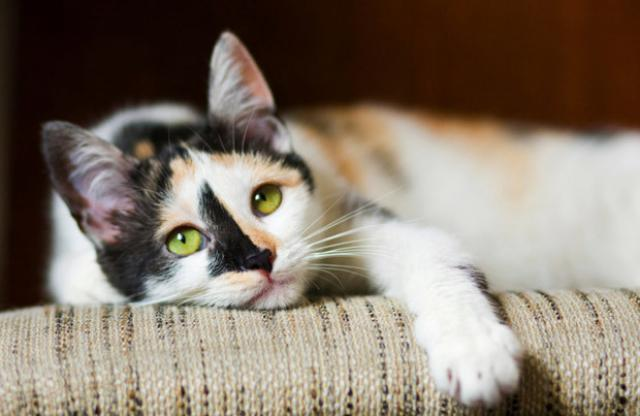 Foto Cosa fare se il Gatto soffoca?