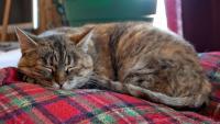 Foto Segni premonitori della Leucemia Felina