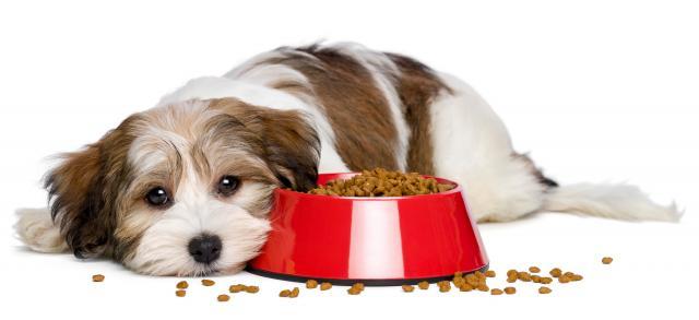 Foto Allergie alimentari nel Cane