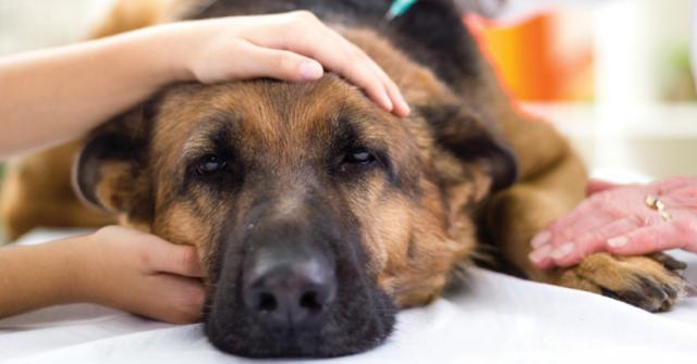 Foto Dieta per un Cane malato di cancro
