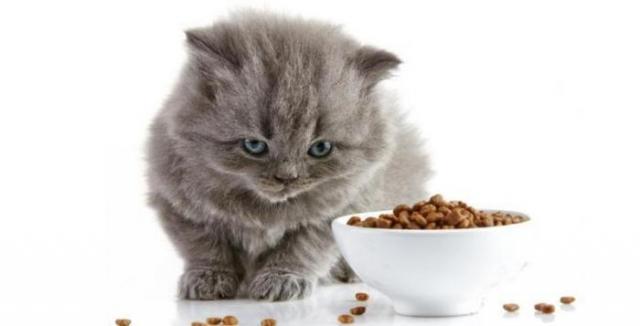 Foto Perche' il gatto non mangia?