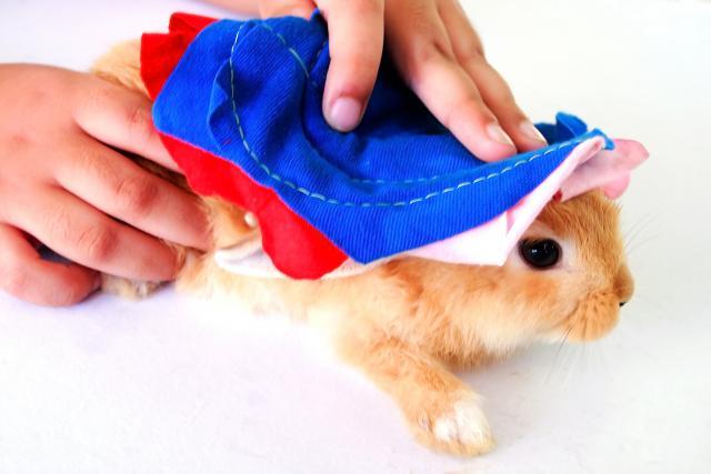 Foto Come lavare il Coniglio a secco