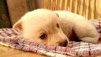 cucciolo ha la febbre