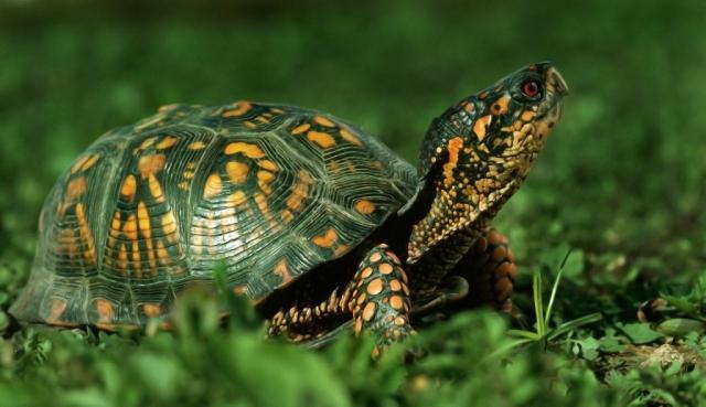 Foto Le malattie della Tartaruga