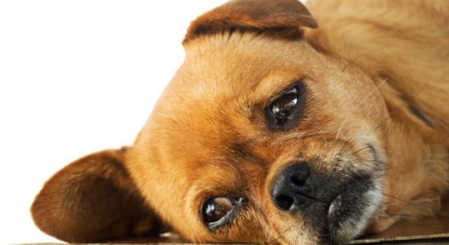 foto diarrea cane