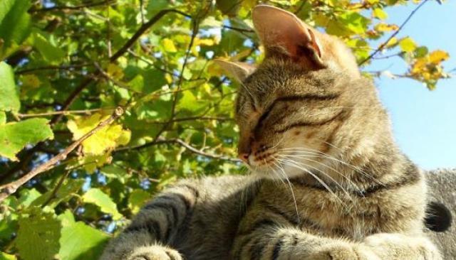 foto gatto stitico
