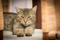 Gatto non fa cacca: cause, sintomi e trattamento