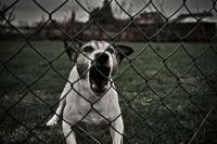 Foto Il Cane abbaia di notte?
