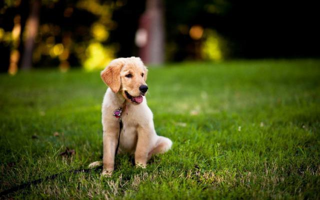 foto cane ammaestrato