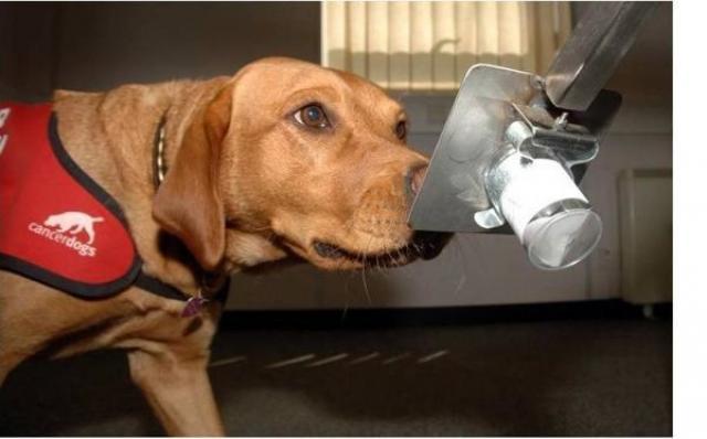 foto cane fiuta cancro
