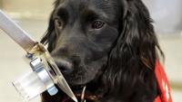 Foto I cani possono sentire l'odore del cancro