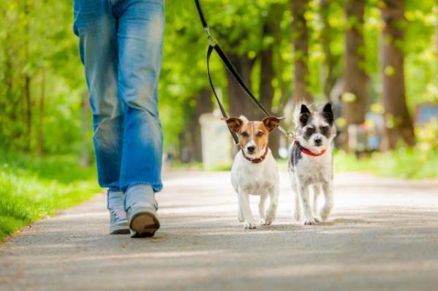 foto cane passeggia