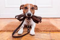 Foto Il cane non cammina: cosa fare?