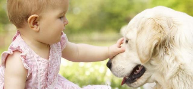 cane aggressivo con bambini