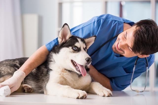 Foto Giardia nel Cane: sintomi e trattamento