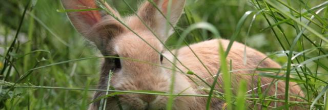 foto coccidi coniglio