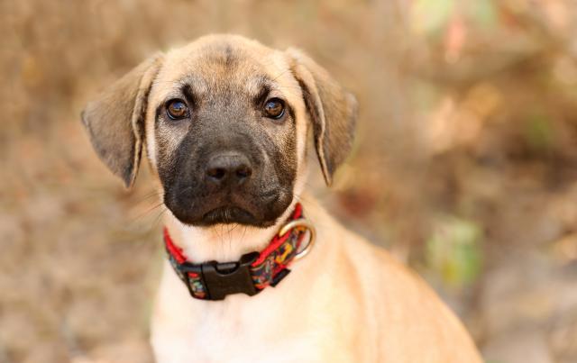 Foto Lipoma nel Cane: cause, sintomi e trattamento