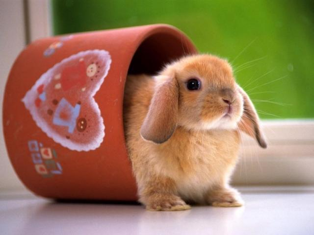 Foto Disidratazione nel Coniglio