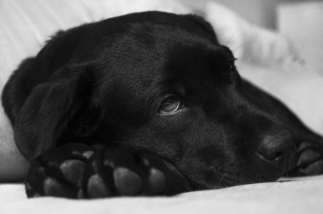 Foto Il Cane epilettico