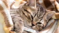 Foto gatto vomita