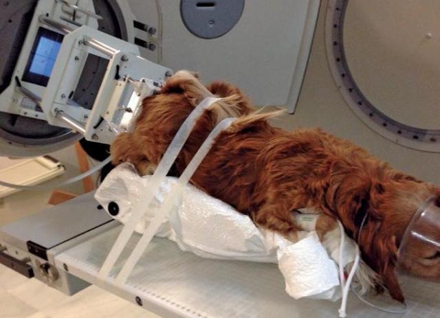 foto cane radioterapia