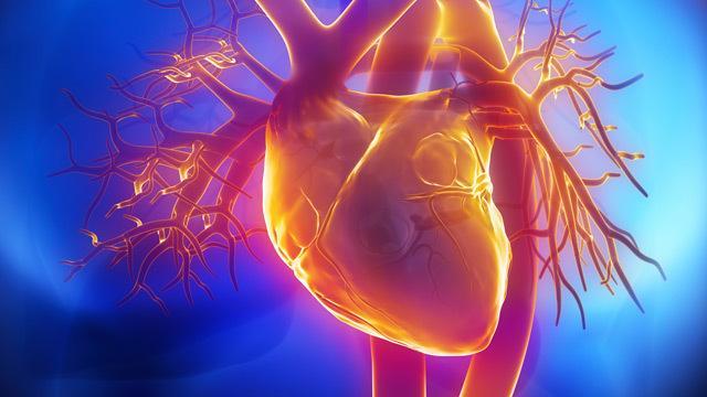 foto cane insufficienza cardiaca