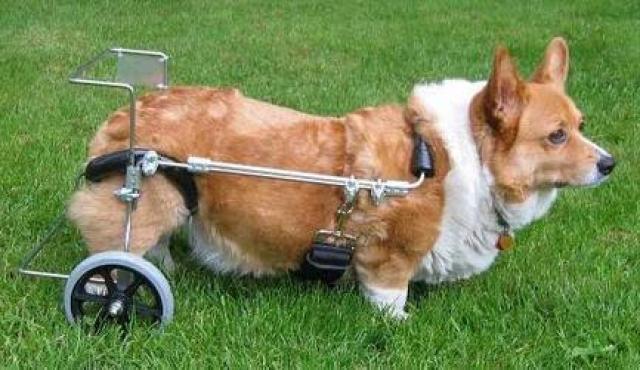 foto cane ernia del disco