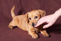 Foto Come evitare un morso del Cane