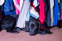 Foto Il Cane ha paura dei tuoni?