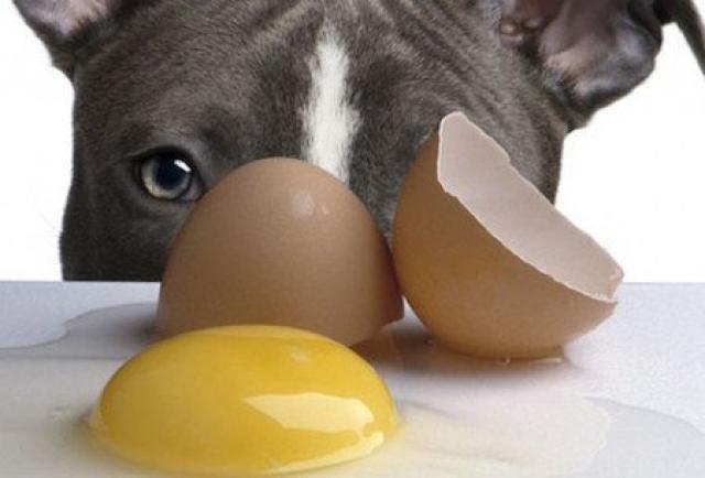 Foto Il Cane può mangiare uova?