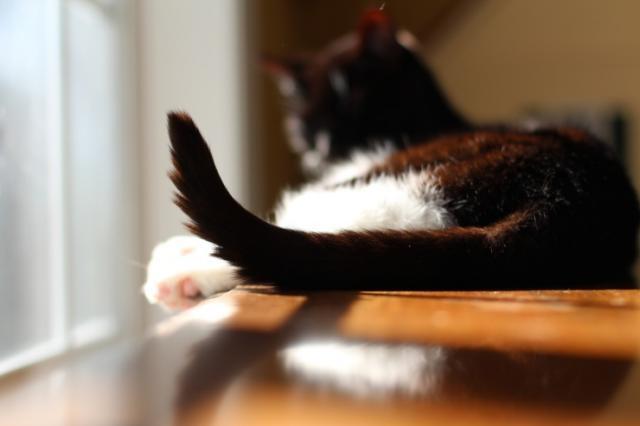 foto coda gatto rotta