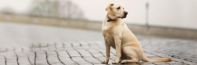 foto cane smarrito