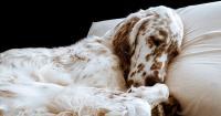 foto cane che dorme
